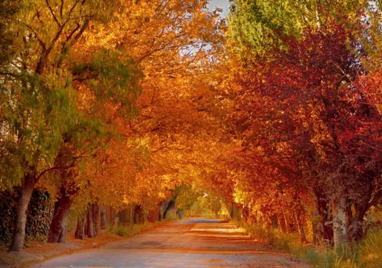 otoño03-801x563
