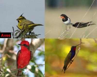 aves-delibera